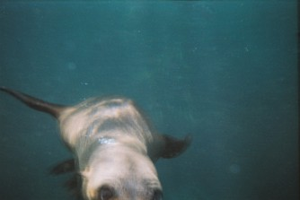Seal safari, Hout Bay, Cape Town, South Africa tourism